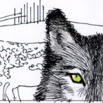 Montana and Idaho Plan Wolf Attacks – By Jack Eidt
