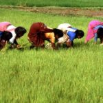 Vandana Shiva: Industrial Agriculture Destroys Life