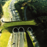 Wildlife Crossings: Animals Survive with Bridges and Tunnels