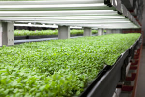 FarmedHere, Chicago, vertical farming