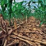 Soil and Nutrition: No-Till Organics and Carbon Sequestration