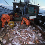 Disappearing Cod: Sustainable Populations Require Long-Term Action