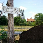 Detroit Works: Urban Farming and Reforestation as Neighborhood Preservation