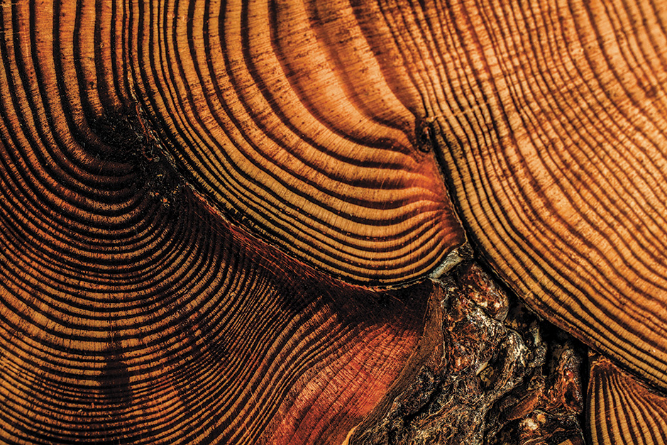 tree rings, dendrochronology