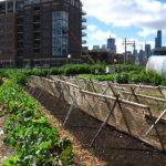 How to Make Urban Farming Sustainable? Distribution.