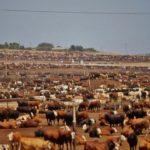 Cowspiracy: Animal Agriculture Despoils Land, Water and Climate