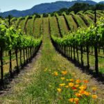 Wild Sonoma's 'Valley of the Moon' – Living with the Land